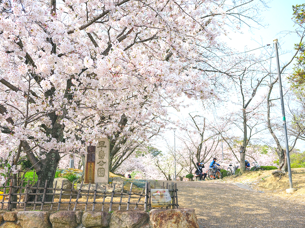 早島公園のさくら
